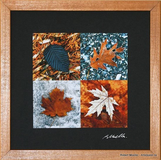Robert Moeller – Capturing Nature in Photography and Glass