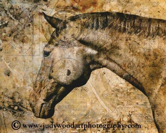 arts-quest-judy-wood-horse