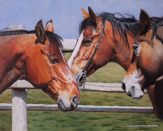 Coloured Pencil Artist Terry Mellway Delights in the Details