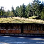 Sod roof for goat only dining