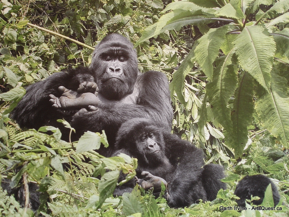 Gorillas in Garth&#8217;s Midst
