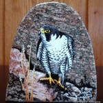 arts-quest-karen-singleton-rock-painting-peregrine-falcon