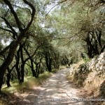 arts-quest-paul-bailey-corfu-scenic8-copy_0