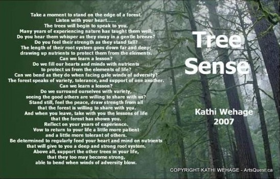 arts-quest-kathi-wehage-portrait-tree-Sense