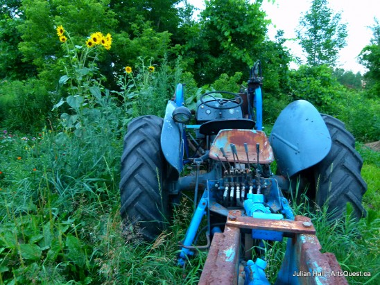 arts-quest-julian-hall-blue-ferguson-tractor-with-sunflowers