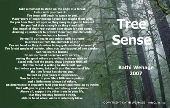 arts-quest-kathi-wehage-portrait-tree-Sense