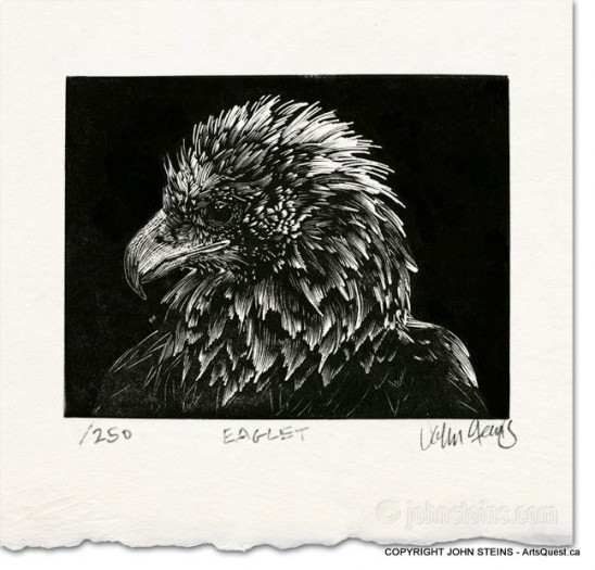 Eaglet - Wood Engraving