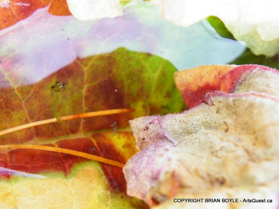 arts-quest-brian-boyle-colourful-leaves